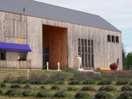 Lavender Farm 31
