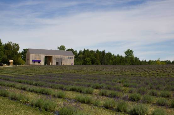 Lavender Farm 38