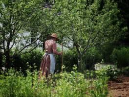 Victorian Garden Album 14
