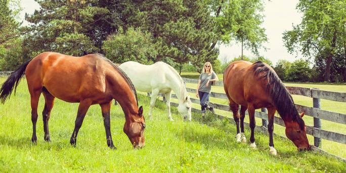 Jenn and horses