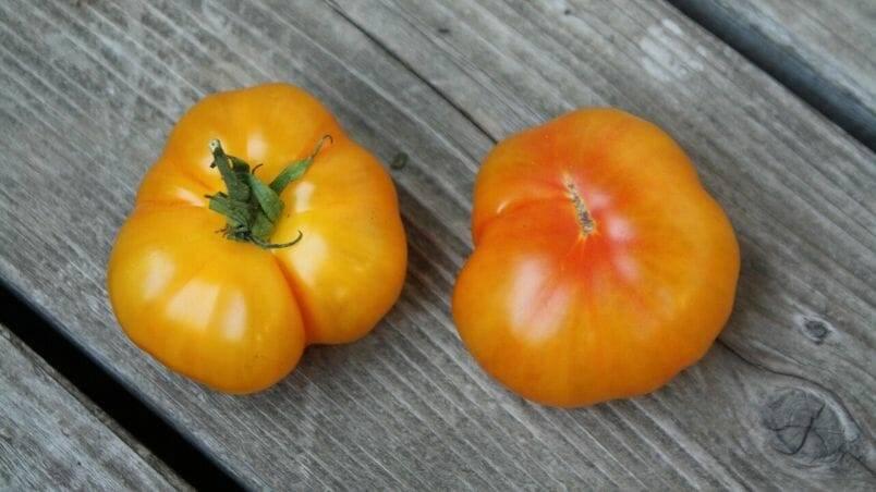 Harrowsmith Jr. - Pumpkin-Shaped Rumi Banjan Tomato