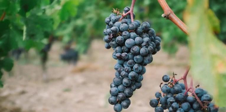 ahr wijn duitsland