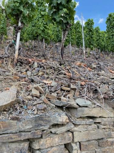 effect bodem smaak wijn