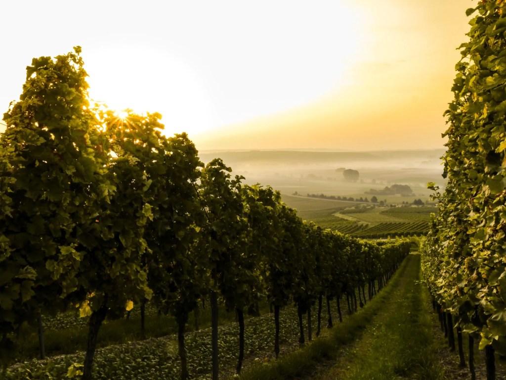 klimaat wijnbouw