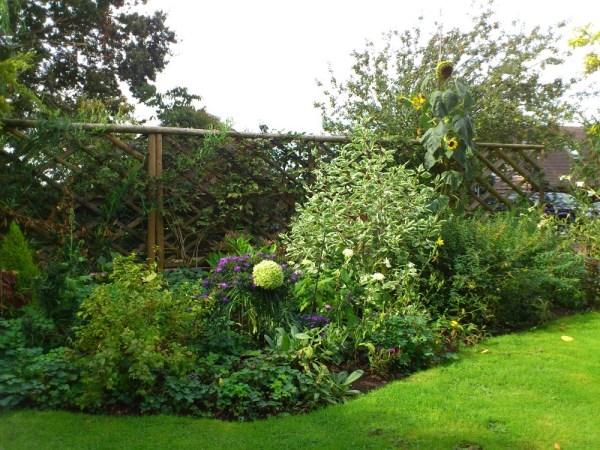 Rustic trellis in Garden
