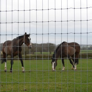 Horse Wire Fence