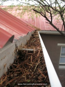1. Gutters filled with debris from overhanging tree branches. Photo taken at the beginning of the rainy season before gutters were cleaned.