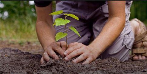 मुख्यमंत्री खट्टर ने गुरुग्राम में की पौधा गिरी अभियान की शुरुआत, लगेंगे 22 लाख पौधे