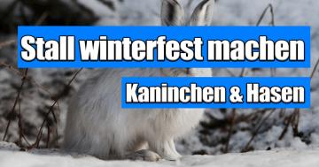 Kaninchenstall winterfest machen Hasenstall winterfest machen - Anleitung isoliert Winter