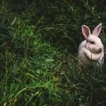 Kaninchenstall günstig kaufen | Das ist zu beachten!
