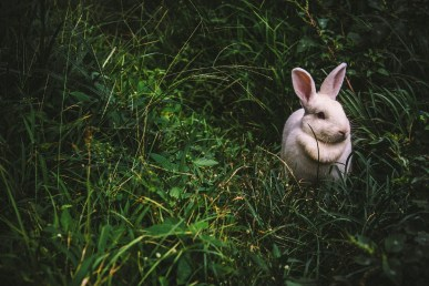 Kaninchen Außengehege kaufen - Freilaufgehege Kaninchen - Schütze dein Kaninchen in einem Kaninchengehege.