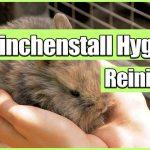 Kaninchenstall Hygiene – Warum Kaninchenstall Hygiene wichtig ist!