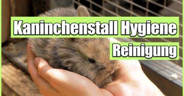 Kaninchenstall Hygiene und Hasenstall Hygiene - warum Kaninchenstall reinigen so wichtig ist!