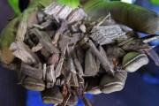 دراسة.. انتاج الطاقة من الخشب كارثي على البيئة والتغير المناخي