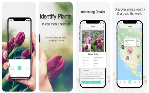 تطبيق PictureThis لمعرفة أنواع النبات والأشجار بواسطة الكاميرا