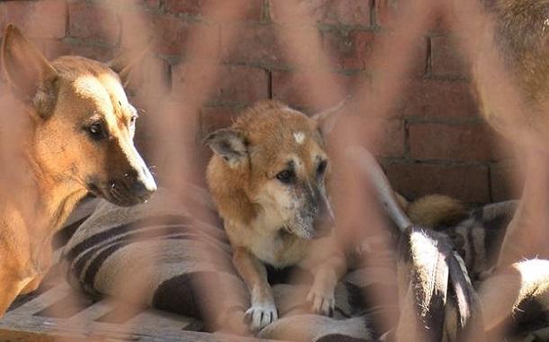 مواقع التواصل ........ تصدير القطط والكلاب يثير جدلا واسعا في مصر