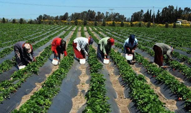 مشاريع ريادية أردنية تطمح للنهوض بالقطاع الزراعي
