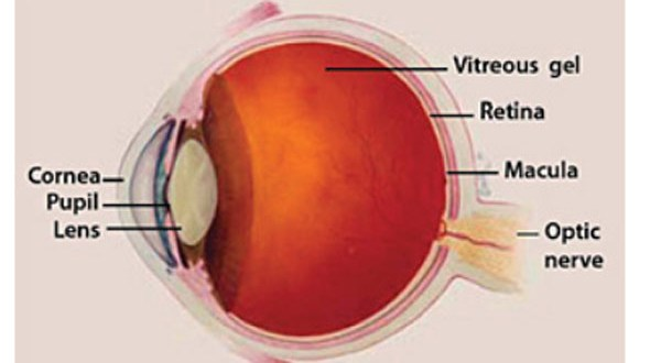 Facts About Macular Edema