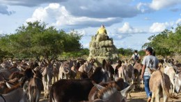 Brazil, donkeys feeding. Credit - The Donkery Sanctuary