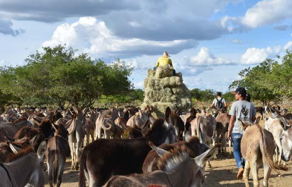 Brazil, donkeys feeding. Credit - The Donkery Sanctuary