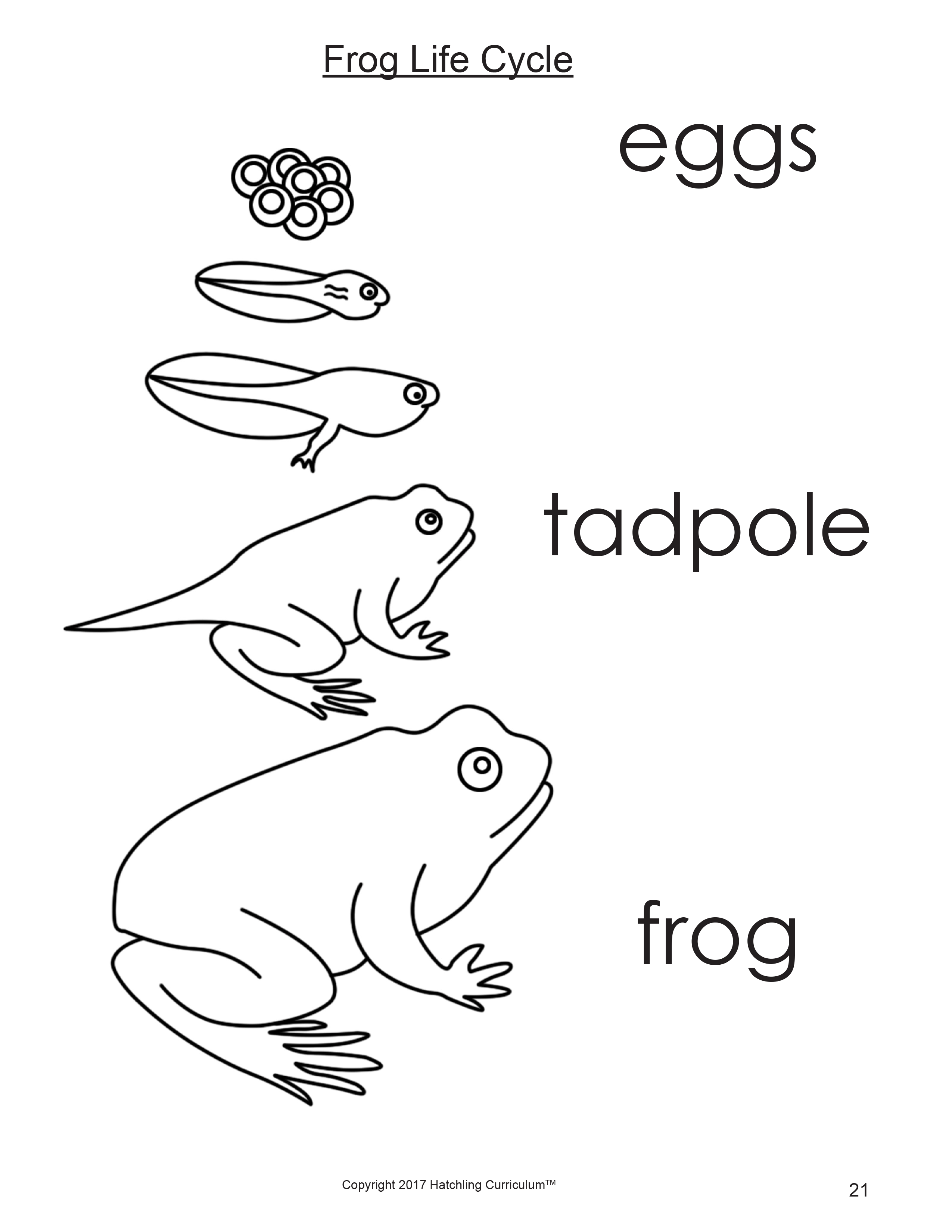 Unusual Frog Life Cycle Printable