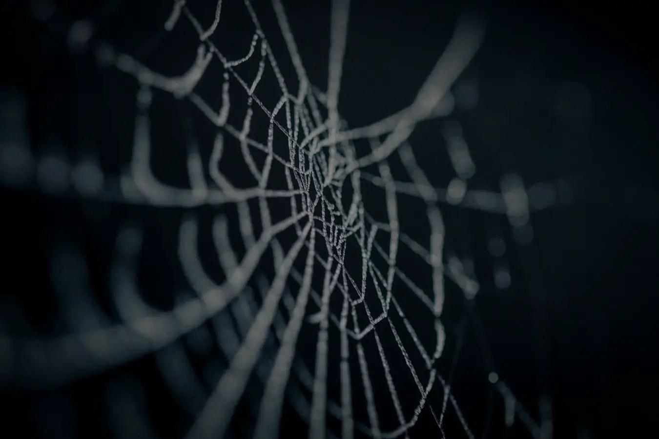 Haunting Halloween Guide 2020. spiderweb