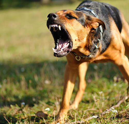 Nebraska dog bite injury attorneys