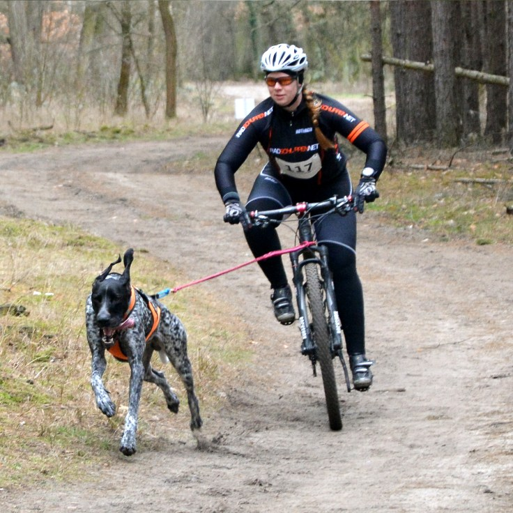 Bikejoering - Fahrrad mit Hund