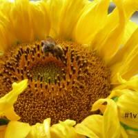 #12 von 12 im Juli: Wo bleibt die Sonne?