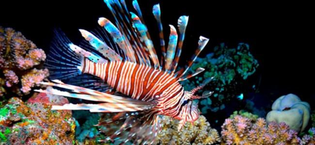 Güney Kıbrıs açıklarında  zehirli balık