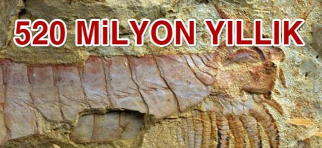 520 milyon yıllık fosil bulundu