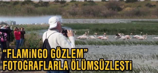 """""""Flamingo Gözlem"""" fotoğraflarla ölümsüzleşti"""