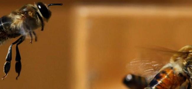 Avrupa'da arı yasağı
