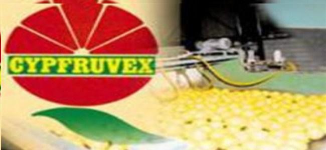 Cypfruvex Standart Dışı Ürün Alacak