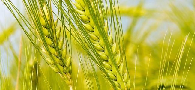 Genel Tarım Sigortası ürün listelerini askıya aldı