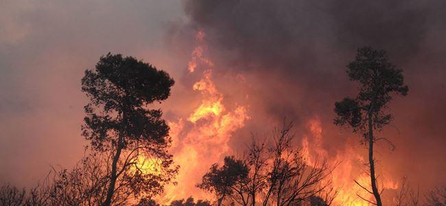 Pirgo'daki yangında 15 dekar yandı!