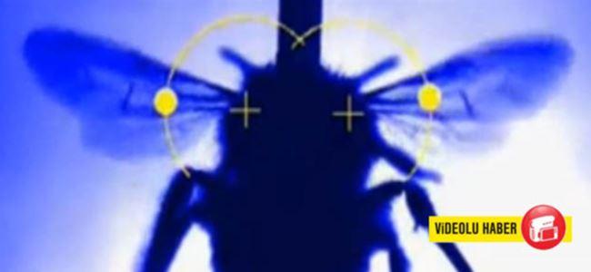 Yaban arısının Kanat Çırpışı X-Ray Altında Gözlemlendi!