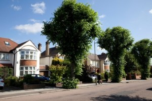 'It's a myth that removing mature trees is the cheapest option' ... trees in the London borough of Barnet.