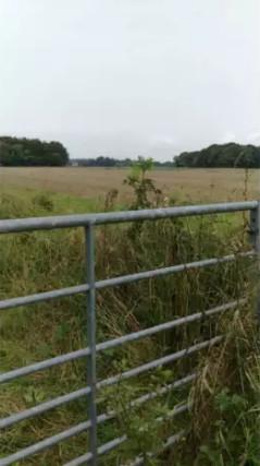 Markwells Wood, Forestside near Rowlands Castle