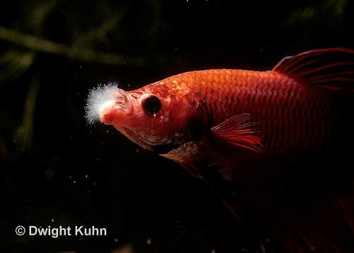 Irımtüzende Balık Hastalıkları
