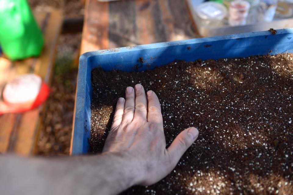 Tohum Ekimi İçin Hazırlık