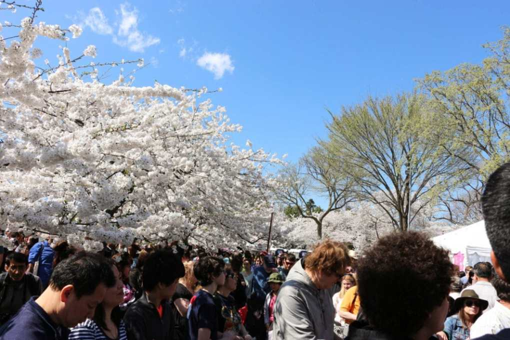 These are crowds at the Tidal Basin. There was also a street performance happening behind us.