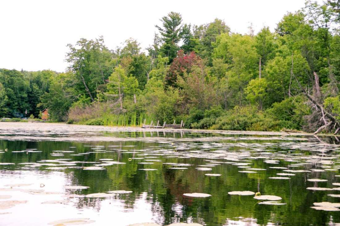 The North Woods
