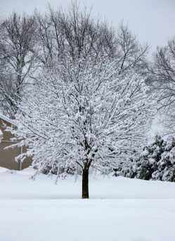 Winter Storm Bucky Wisconsin