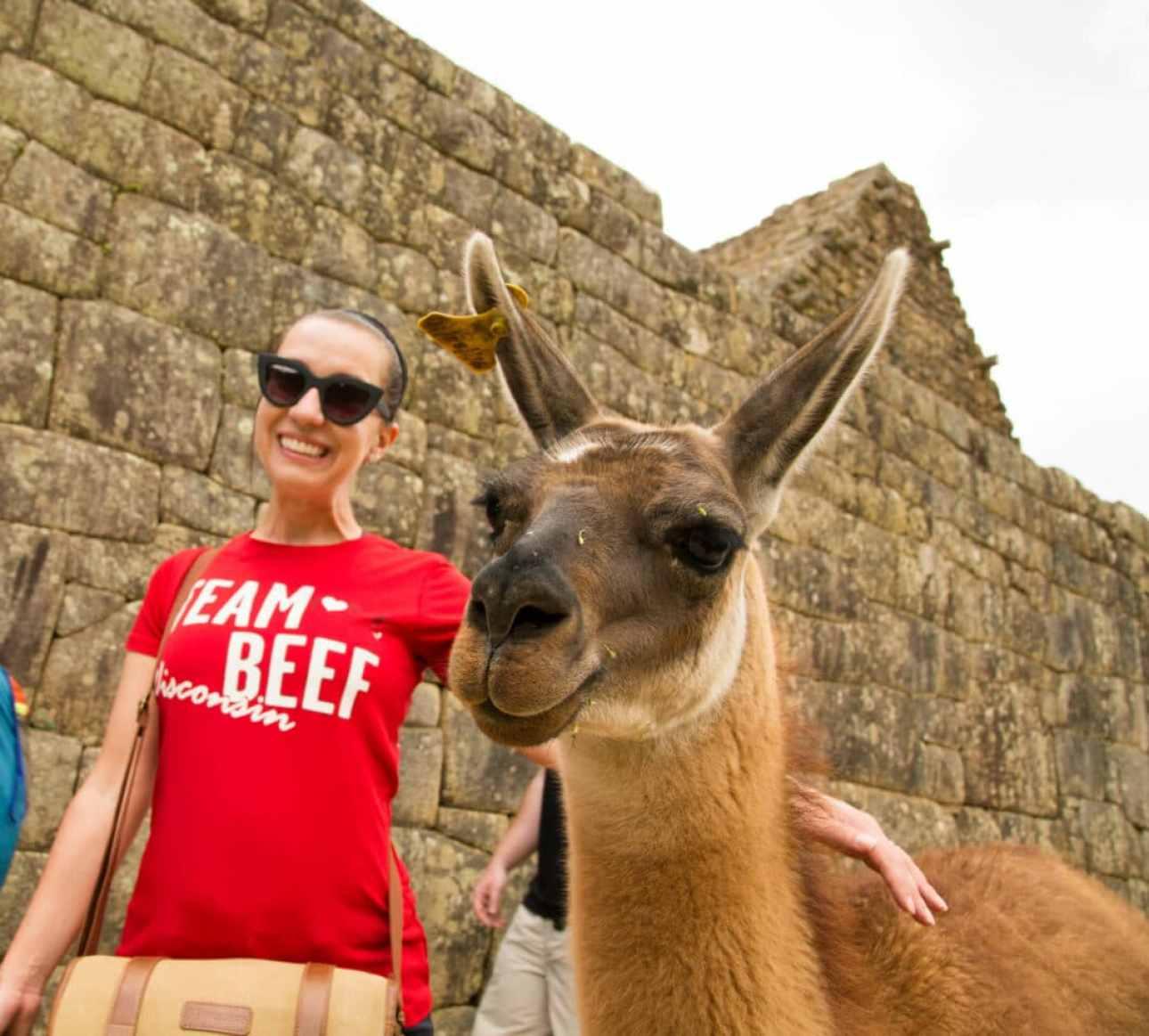 llamas at Machu Picchu