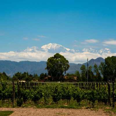Wine Tasting & Biking in Mendoza, Argentina – Is It a Good Idea?