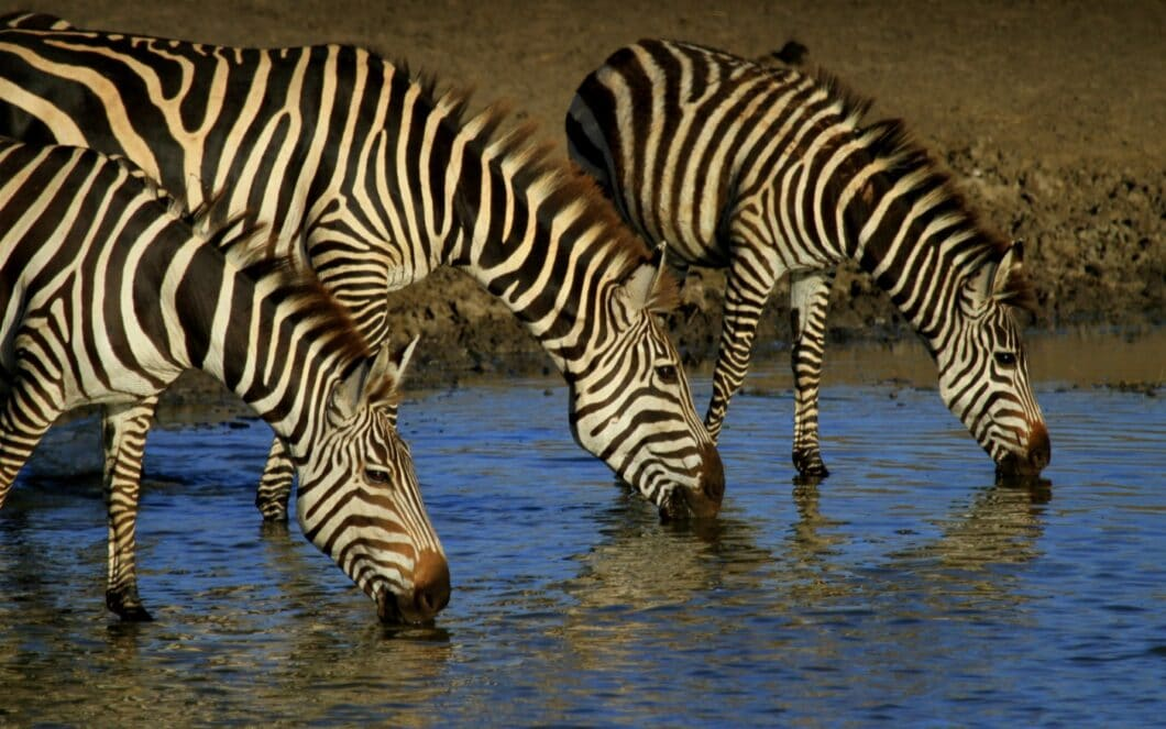 Planning a Trip to Africa? Tanzania Should Be at The Top of Your List