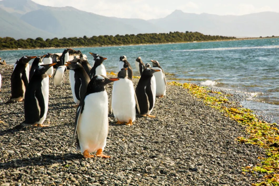 What to Expect When Walking With the Penguins on Martillo Island, Argentina
