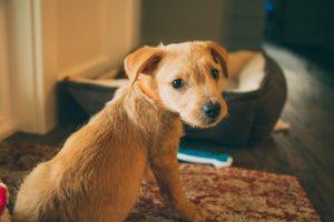 Meet Buddy our new puppy
