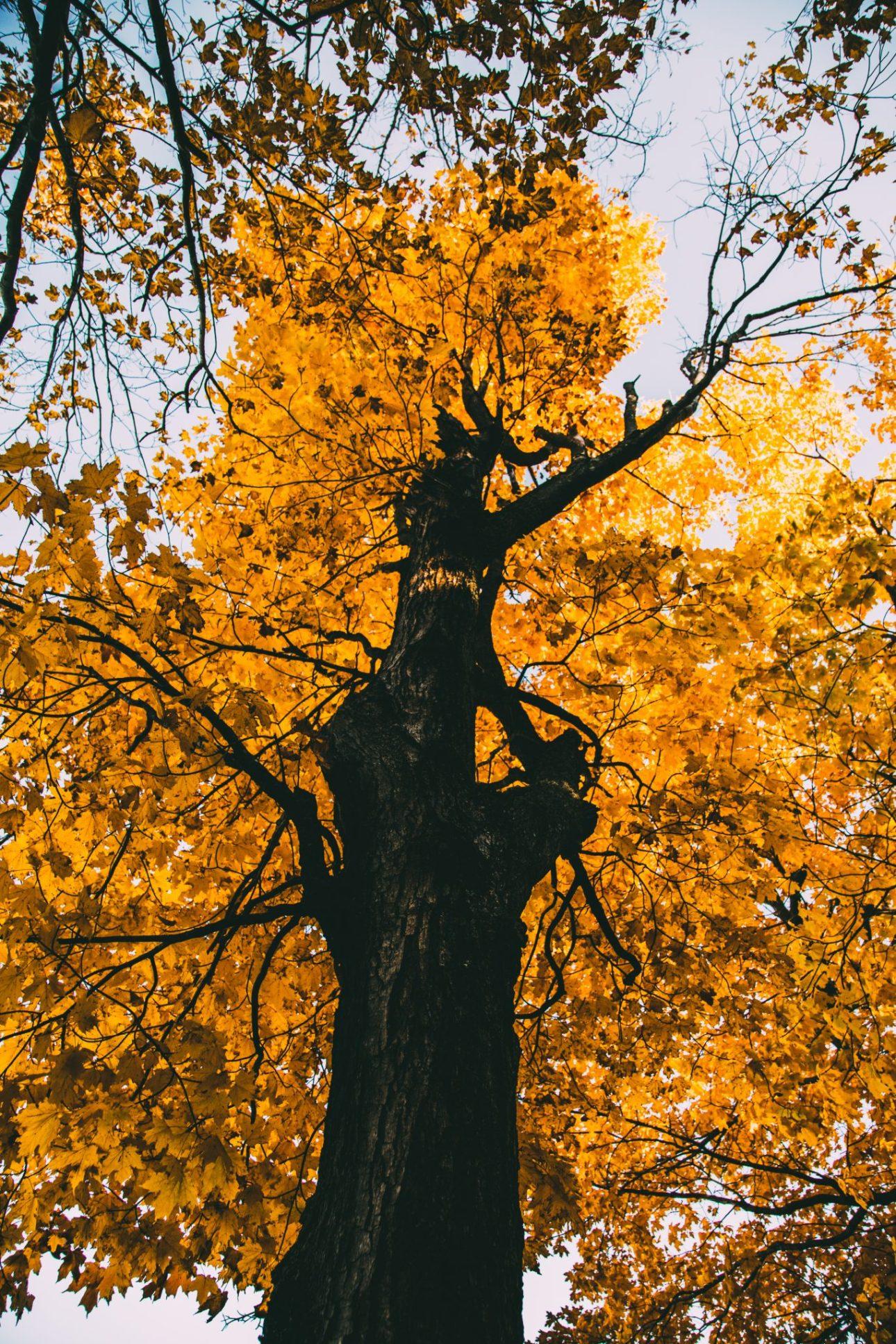 Fall colors in Door County Wisconsin